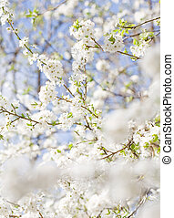 In bloom. - In bloom, delicate colorful spring flowers lit...