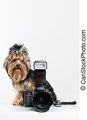 Funny little dog with digital camera - Funny little dog with...