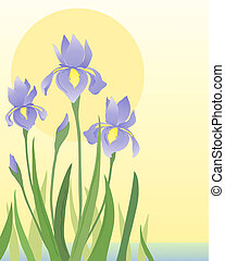 irises - an illustration of beautiful blue iris flowers and...