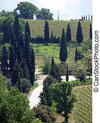 Tuscan landscape with vineyards and cypresses