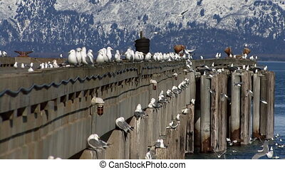 Gulls Wheeling Off Deepwater Dock - Sea gulls perching,...