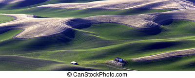 Palouse panoramic. - A panoramic image of the green of the...