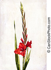 Watercolor red gladiolus - Illustration of watercolor red...