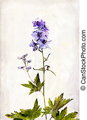 Watercolored delphinium - Illustration of watercolor...