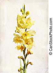 Watercolor yellow gladiolus - Illustration of watercolor...