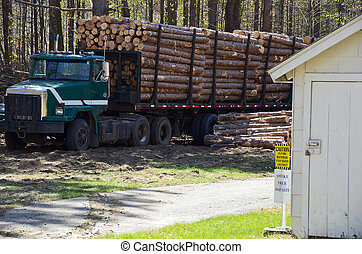 logging truck - Pine logs on a flatbed trailer.