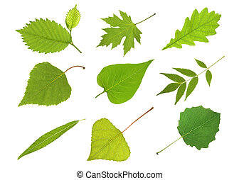Collection  leaves