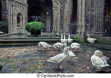 Cathedral in Barcelona - Geese in Cathedral of Saint Eulalia...