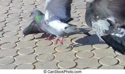 pigeons on the sidewalk