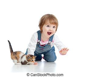 有趣, 小貓,  scottish, 玩, 孩子