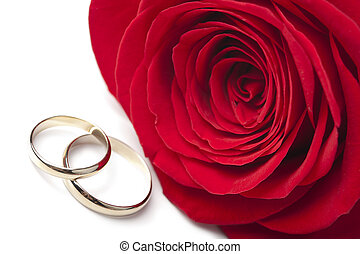 Golden wedding rings and red rose isolated