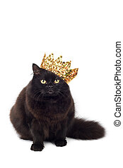 black cat wearing golden crown isolated