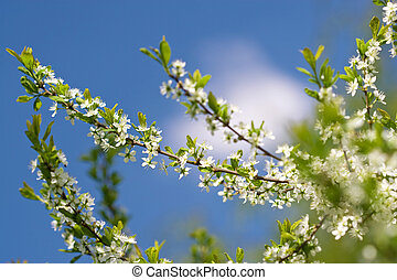 white flowers in front of sky