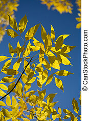 beautiful autumn leaves against blue sky