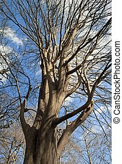 Siberian elm, majestic tree standing up to the sky park in...