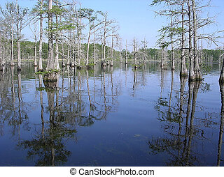 Mississippi Black Bayou April 2003 - Reflection of cypress...