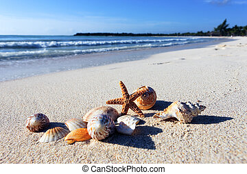 shellfish beach