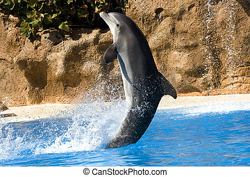 Dolphin dancing in water in Loro Park, Tenerife, Canary