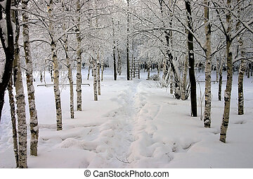 snow-bound trees in a park
