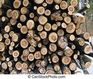 stacked tree trunks logs pile in winter forest timber...