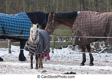 Horses wearing blankets in wintertime - Three Horses wearing...