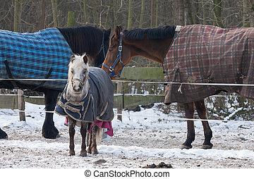 Horses wearing blankets in wintertime