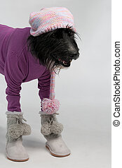 Dog with casual style winter clothes