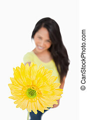 Close-up of a Gerbera holding by a young woman