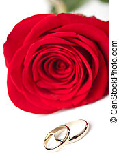 Gold wedding rings and red rose isolated