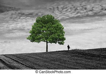the walker alone in the fields