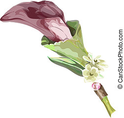 Calla burgundy color. Imitation watercolor. Vector...