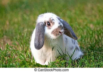 beautiful rabbit  - rabbit on the green grass