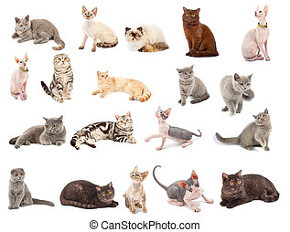 Collection of a cats in different poses isolated over white...