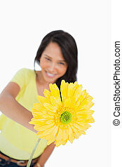Close-up of a yellow Gerbera holding by a young woman