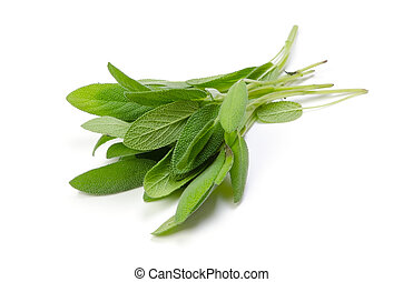 sage - Cooking ingredient series sage