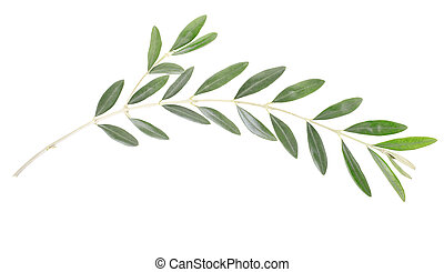 Olive branch peace symbol - Olive branch and leaves isolated...