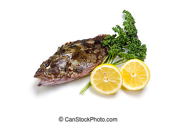 scorpion fish - Cooking ingredient series scorpion fish....