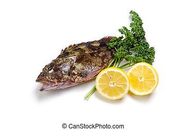 scorpion fish - Cooking ingredient series scorpion fish....