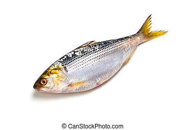 thread shad - Cooking ingredient series thread shad....