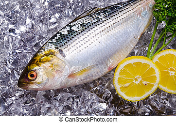 thread shad - Cooking ingredient series thread shad. for adv...