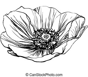 poppy flower - a black and white picture poppy flower
