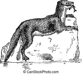 Eurasian Otter or Lutra lutra, vintage engraving - Eurasian...
