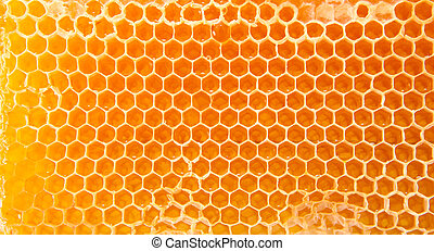 Beer honey in honeycombs. Natural sweet.