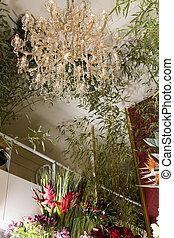interior, exótico, flor, Tienda