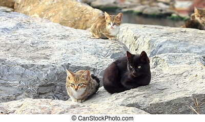 Cats sitting on a rock