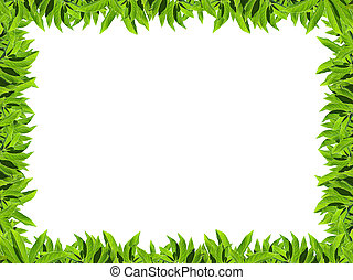 Natural green leaf frame on white background