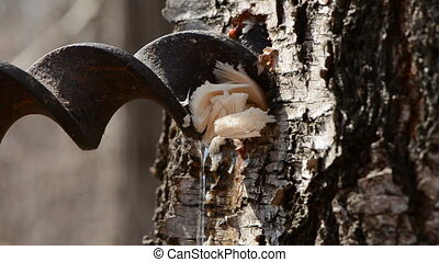 birch sap fresh drops and drill