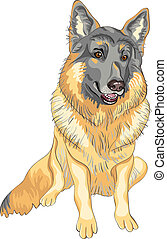 vector dog German shepherd breed smile - color sketch...