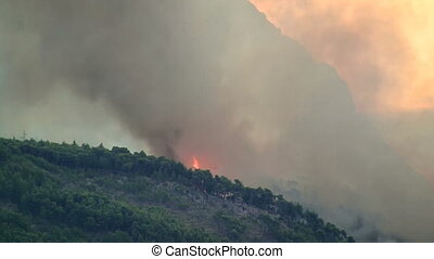 Fire burning in forest - Fire burning in green forest