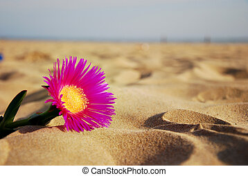 Lonely flower on a sandy beach - Lonely pink flower on a...